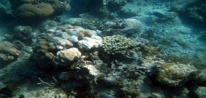 Abre centro cubano para estudio de acidificación marina