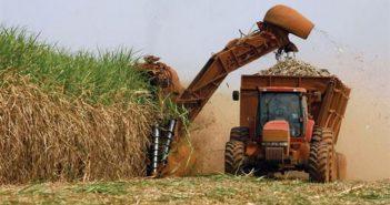 Sugar harvest requires daily heroism